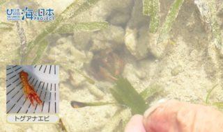 沖縄県-A11-S02