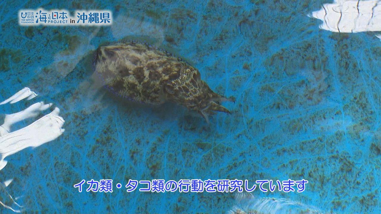 沖縄県-A28-s2