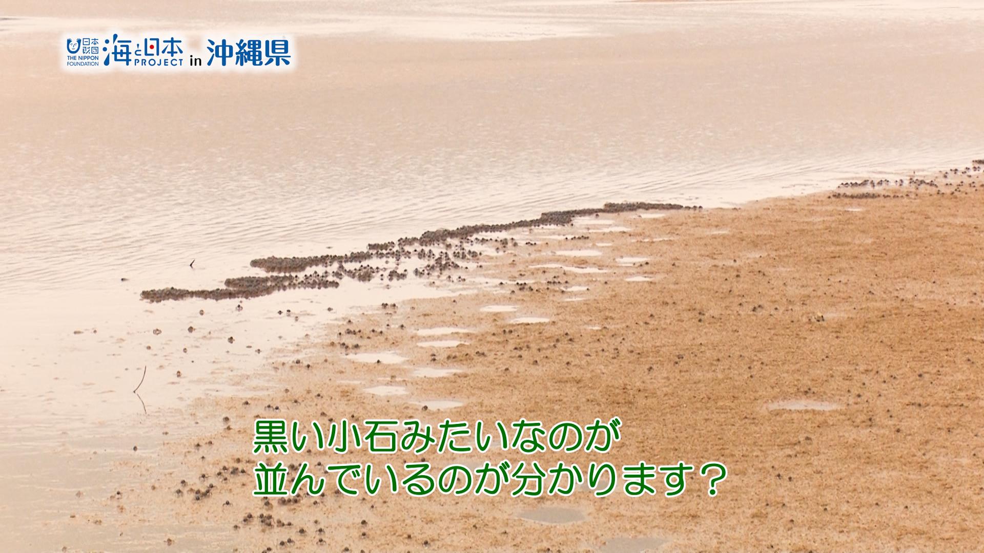 #9 平坂さん.00_01_00_06.静止画009